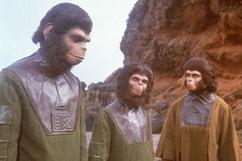 apes-trio2.jpg